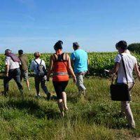 Les visites autour du vin du domaine et du vignoble