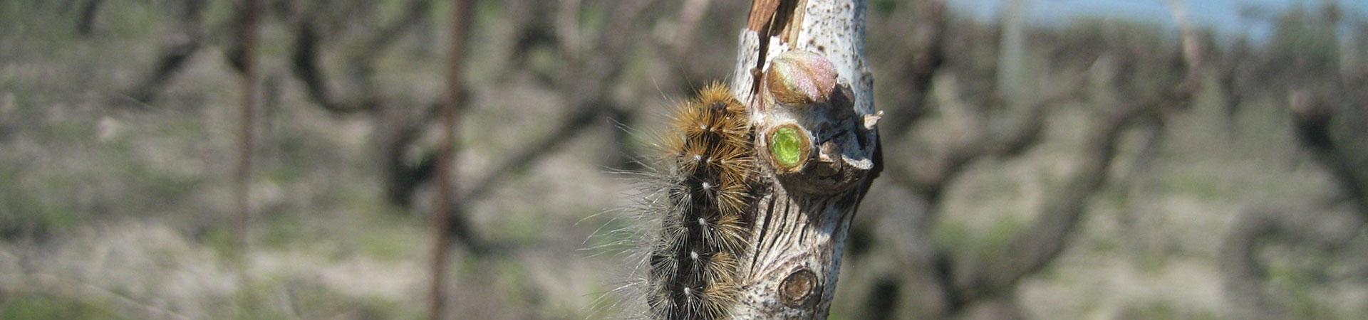 jardin_d_edouard-vingneron_raisone-caterpillar